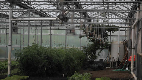 Soft focus shot of the interior of a greenhouse Footage