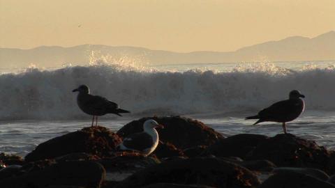 Waves break on a beach behind seagulls Stock Video Footage
