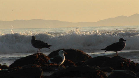 Waves break on a beach behind seagulls Stock Video Footage