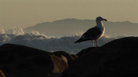 Surfers Ride Waves Behind A Seagull stock footage
