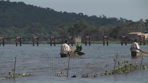 Medium-shot of fishermen rowing their boats on Lake Victoria, Uganda Footage