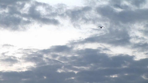 Zoom-out of a lone bird winging towards a darkening sky... Stock Video Footage