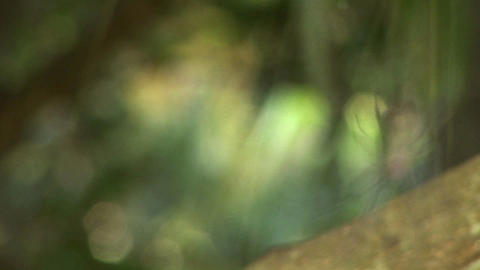 Rack focus of a spider as it hangs in its web Stock Video Footage