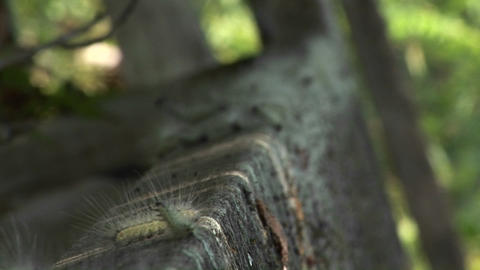 Hundreds of caterpillars move across a stone step in the... Stock Video Footage