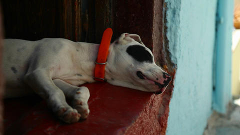 Dog sleeping in an alley Stock Video Footage
