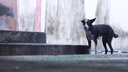 Lonely Black Dog Footage