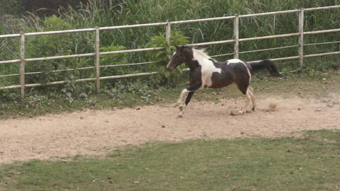 Galloping horse Footage