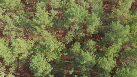 Aerial Pine Forest Houses River Live Action