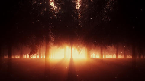 Orange Mystical Forest by Night with Light Rays - Loop Landscape Background Animation
