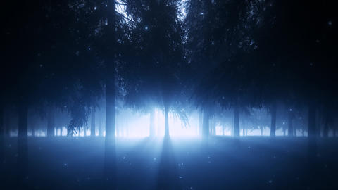 Mystical Forest by Night with Light Rays - Loop Landscape Background Animation