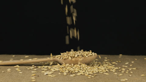 Barley grains fall into a wooden spoon and heap is poured. Slow motion Live Action