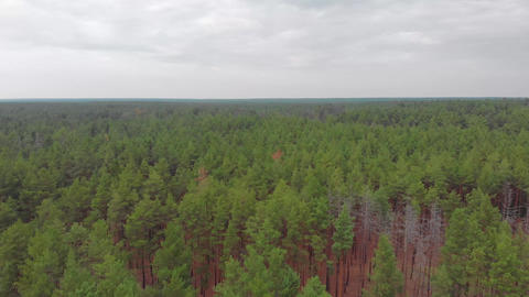 Aerial Over The Trees GIF