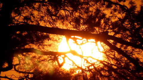 Sunset through tree branch Footage