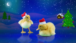 New Years holidays, cute funny little ducklings in Santa hats, standing on the i Footage