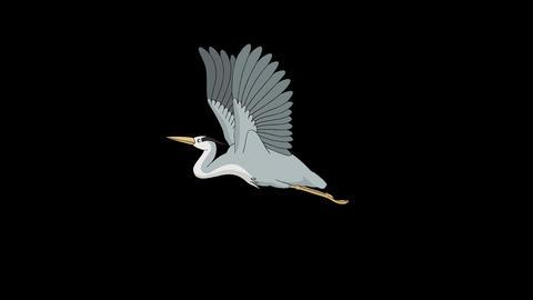 Heron flies in the sky alpha mate Videos animados