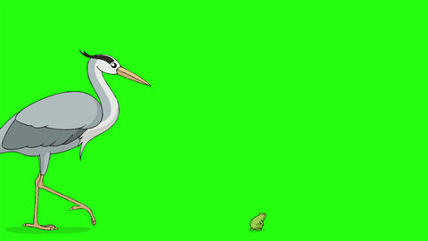 The heron goes to hunt a frog chroma key Videos animados
