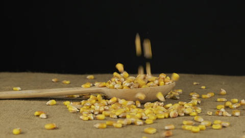 Corn grains fall into a wooden spoon and heap is poured. Slow motion Live Action