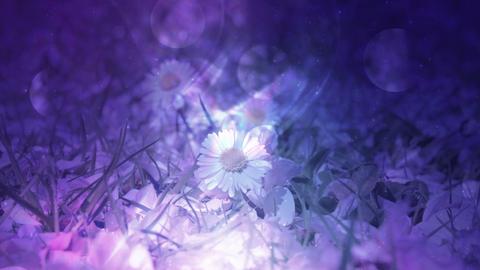 Glowing Floral Design Background Loop 애니메이션