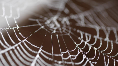 Beads of moisture on threads of spider's web Live Action