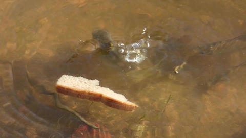 Feeding Fishes Footage