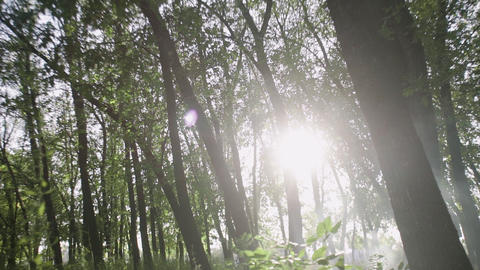 Beautiful Suns rays through tops of trees, sun shines through foliage Live Action