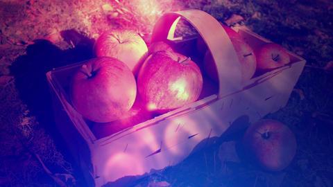 Fall Season Apples Background CG動画