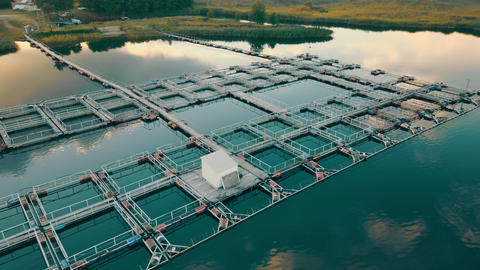 Fish farm on the lake. The flight of fish farming at sunset. A swallow flies by Live Action