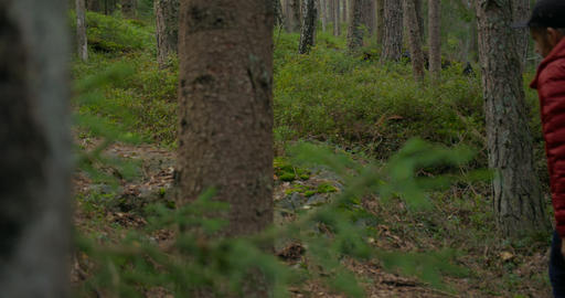 Man and pet basenji dog have fun on forest walk Live Action
