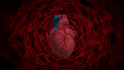 Heart blood cell loop animation Animation