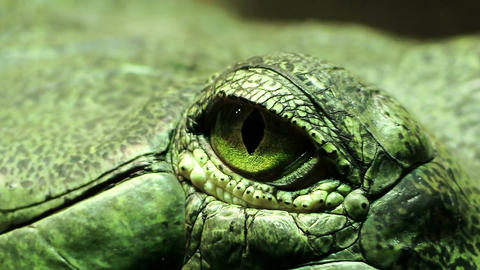 the eye of a green reptile; crocodile Footage