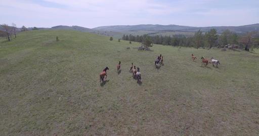 Wild horses run Footage
