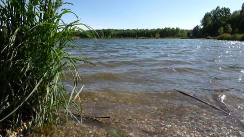 Waves on pond surface Footage