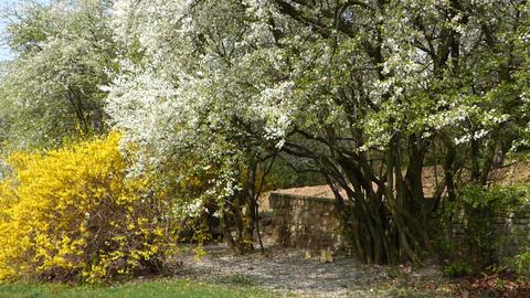 Spring trees Footage
