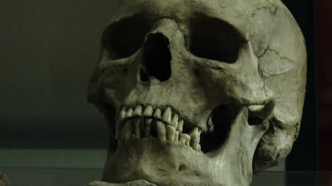 skull: archaeological find in a museum Footage