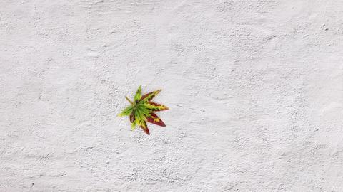 Autumn leaf falling. Stop motion CG動画