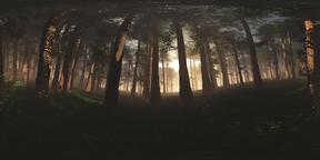Deep Forest VR360 3D Illustration Fotografía de realidad virtual (RV) en 360°