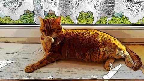 Washing relaxing cartoon cat Stock Video Footage