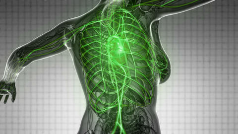 loop science anatomy scan of woman heart and blood vessels glowing Footage
