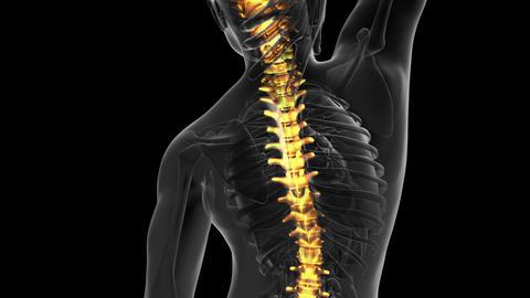 backbone. backache. science anatomy scan of human spine bones glowing Animation