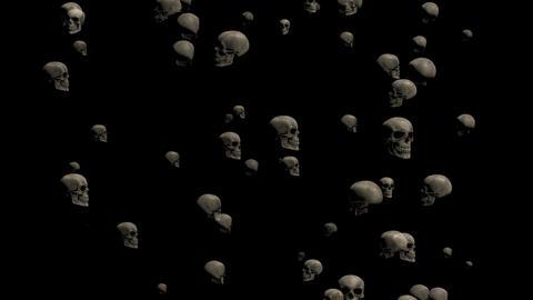 Skull CG Noise Gridge Animation Animation