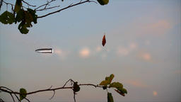 The shot and bullet flying on background of the dry leaf, sky and moon Footage