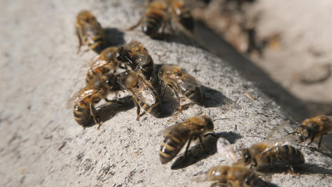 Bee colony. Bees crawl on the slate Live Action