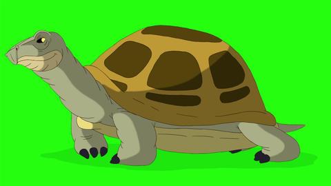 Big swamp turtle sniffing chroma key CG動画