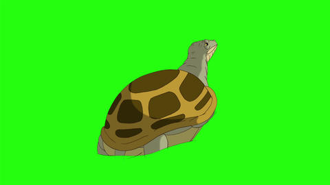 Big swamp turtle crawling out of sand or water chroma key CG動画