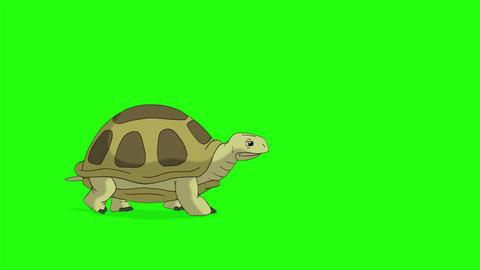 Big swamp turtle walks chroma key CG動画