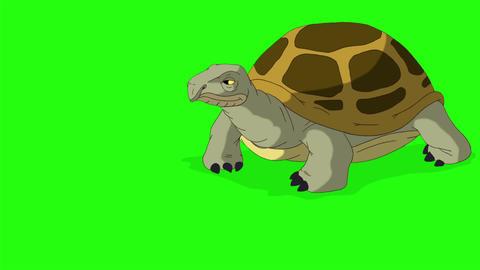 Big swamp turtle takes a few steps chroma key CG動画