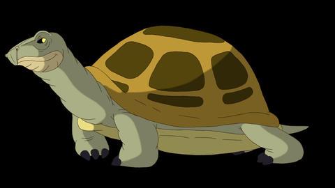 Big swamp turtle sniffing alpha mate CG動画