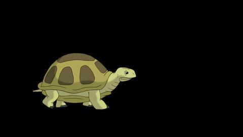 Big swamp turtle walks alpha mate CG動画