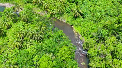 River in the rainforest. Philippines, Mindanao ライブ動画