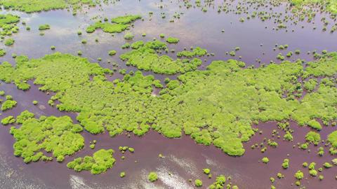 Green mangroves. Great Santa Cruz Island. Philippines, Zamboanga ライブ動画